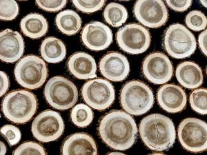 wood-647597_960_720