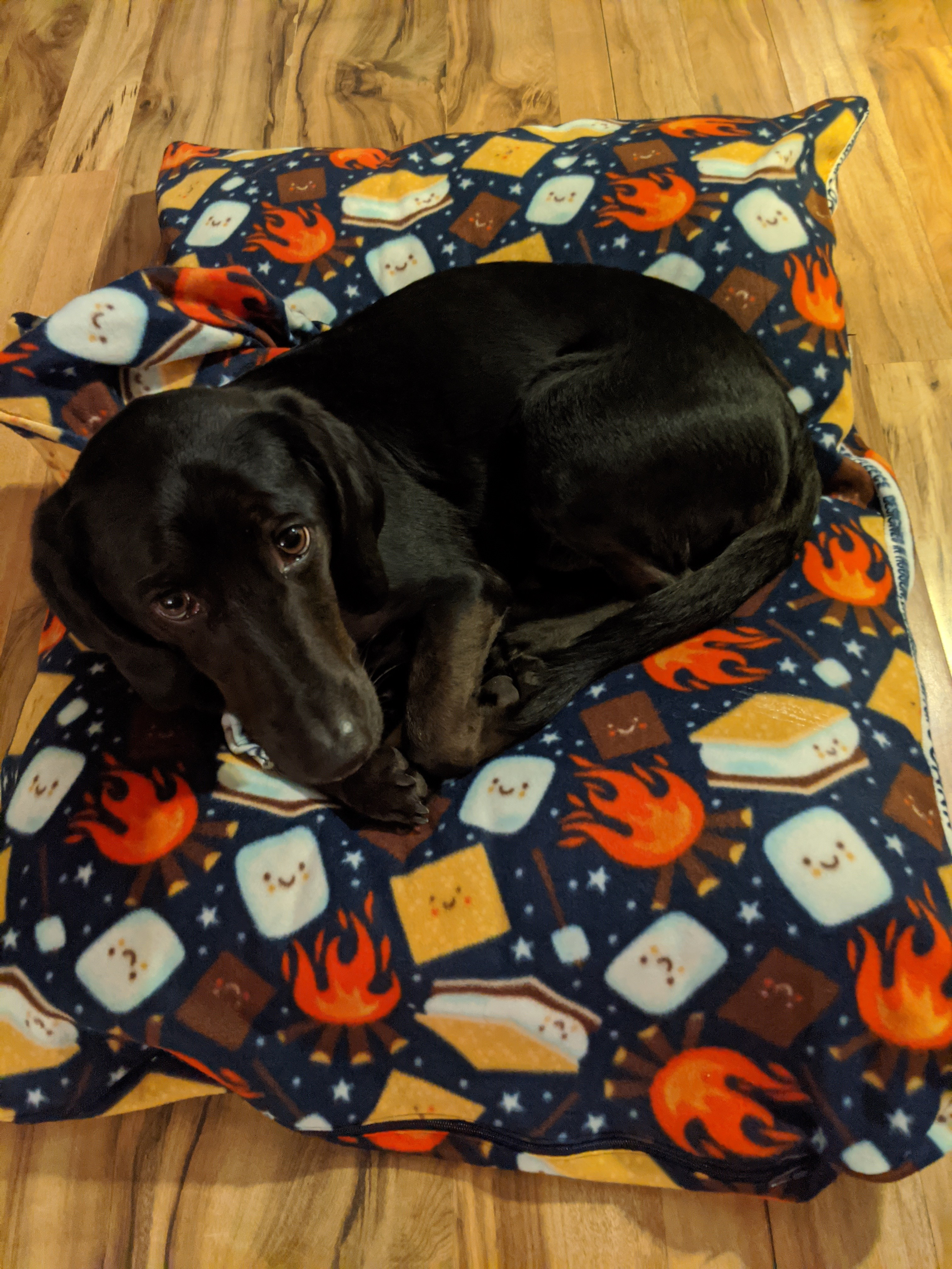 Loche on his new dog bed -- a navy bed with smores on it.