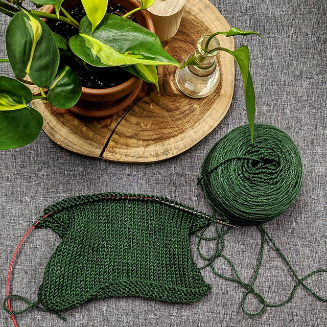 Top view of small pothos plant and philodendron rootings. Below the plants there is a green half done stockinette gauge swatch on circular needles. The swatch's yarn is still connected to a yarn cake.