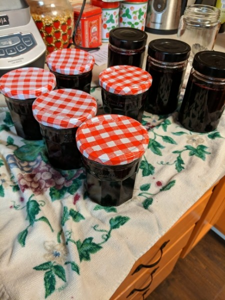 Eight jars of blueberry jam cooling on a kitchen towl.